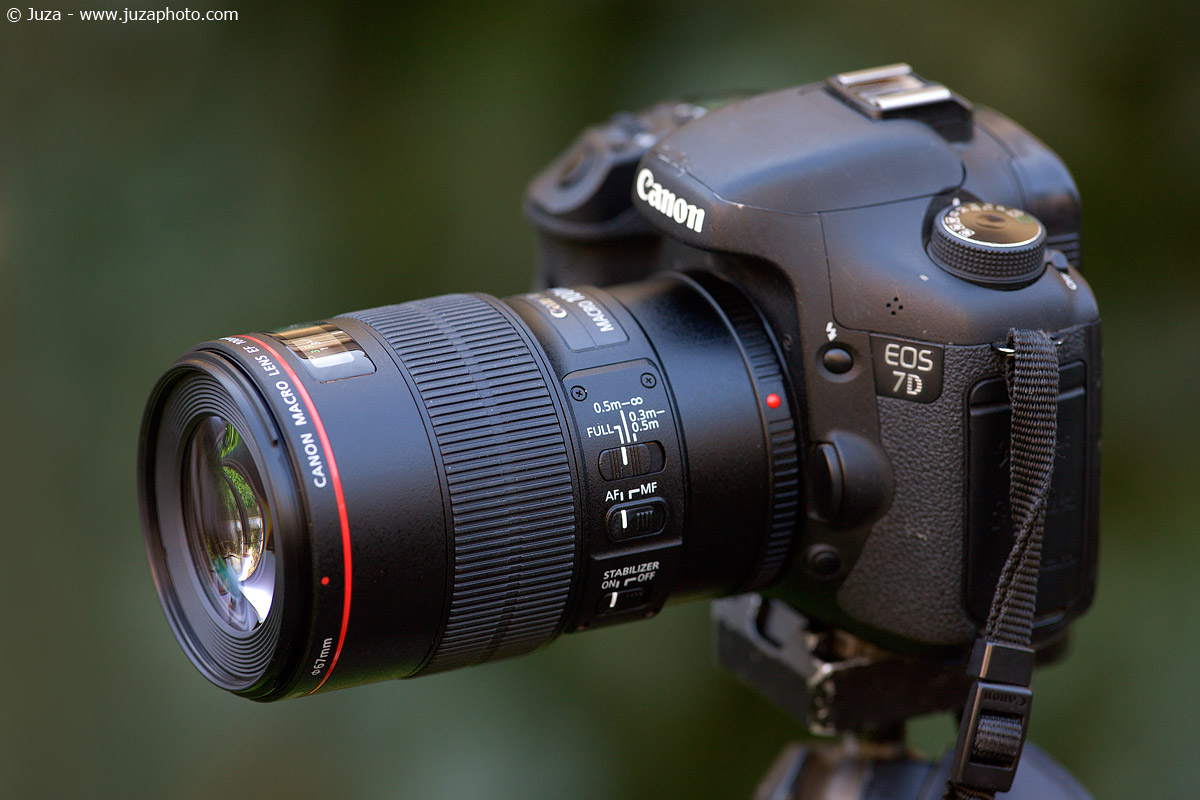 Canon 100mm Macro L IS USM Review | JuzaPhoto
