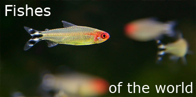 [Fishes of the world]