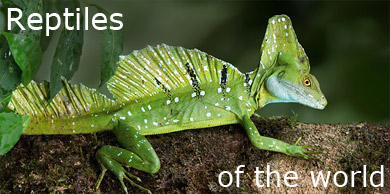 [Reptiles of the world]