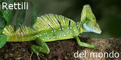 Life fauna e flora del nostro pianeta juzaphoto for Nomi di rettili